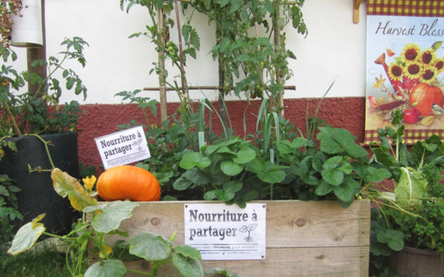 Mises en Cultures #3 Autonomie alimentaire - Eden, Centre Culturel de Charleroi, arbres, nature, urbain, nature en ville, plantation